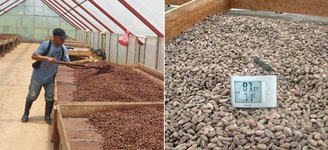 grano-cacao
