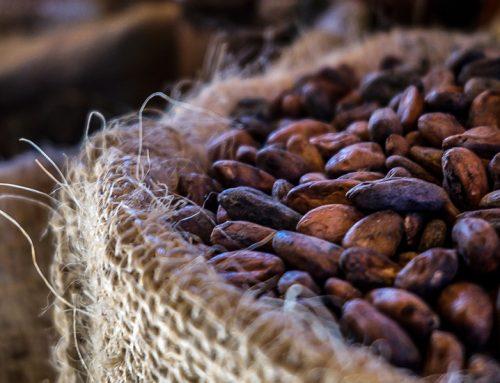 Características organolépticas útiles en la definición de la calidad del cacao