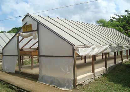 secado-cacao2