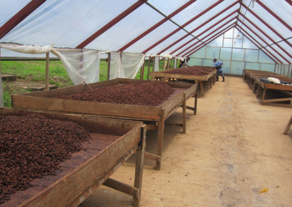 secador-cacao
