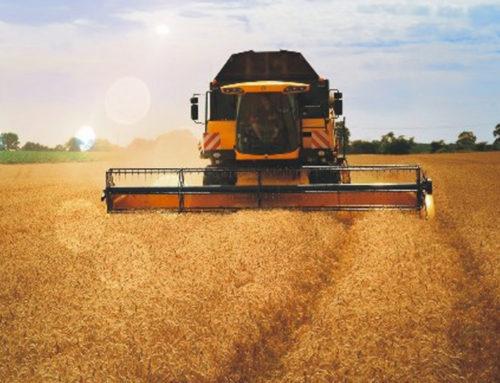 Las altas temperaturas amenazan la seguridad alimentaria